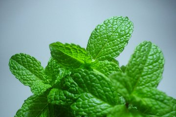 Mint is especially helpful for clearing the sinuses.
