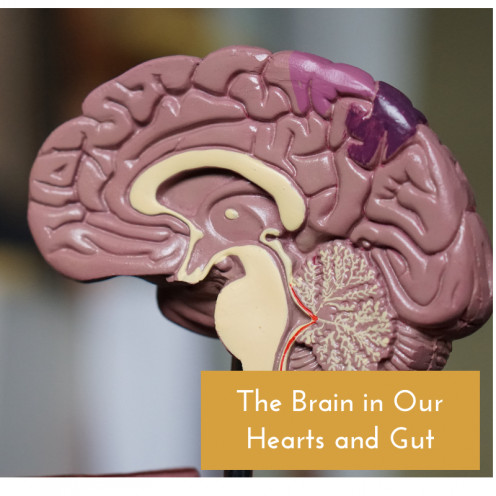 Brain Found in Heart Neurons and the Gut
