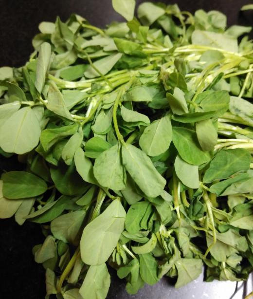 Fenugreek or methi leaves
