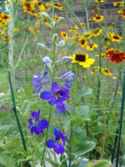 A variety of wild flowers grown from seeds that my sons and I picked out. What a great experience that I would do again and again! I highly recommend it.