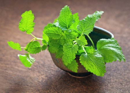Lemon balm is a very versatile plant that has many uses, and is well known for its lemony scent and taste.