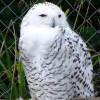 Authorite profile image