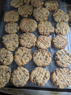 Cashew Butter Cookies with Mini Chocolate Chips