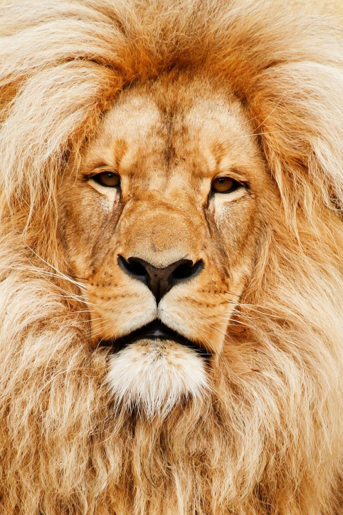 The picture of this lion symbolizes the lyrics of the title track called King of the Kill. The lion is considered the king of the jungle.