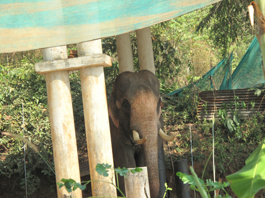The Temple Elephant
