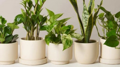 Plant Power! Indoor Air Purification with Plants