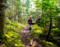 One of Biblical Promises: Making a Way in the Wilderness