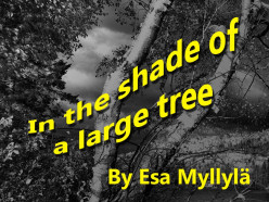 In the shade of a large tree
