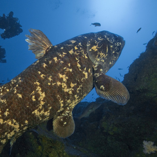 Coelacamath Fish