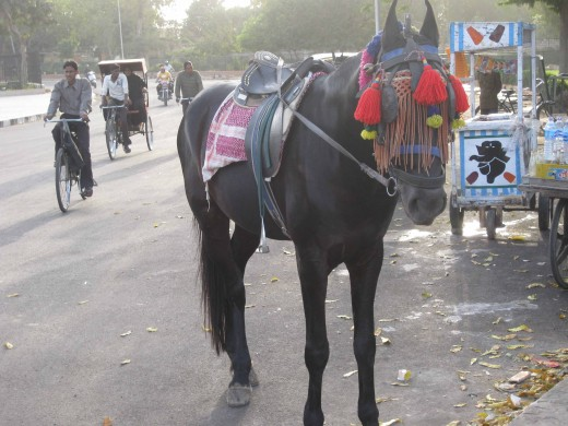 Horse standing at Ramniwas Bagh