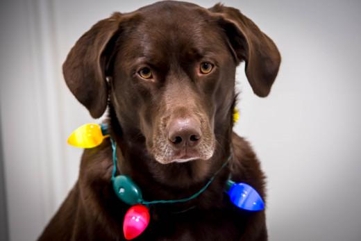 Is Single Dog Ownership Selfish?