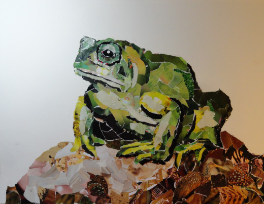 Photo of the collage frog