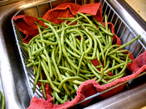 Green beans for making dilly beans, aka pickled green beans, are another beloved task.