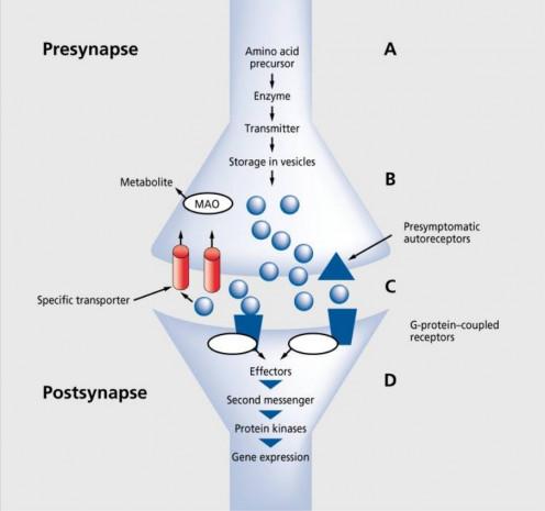Biochemical Basis of Depression