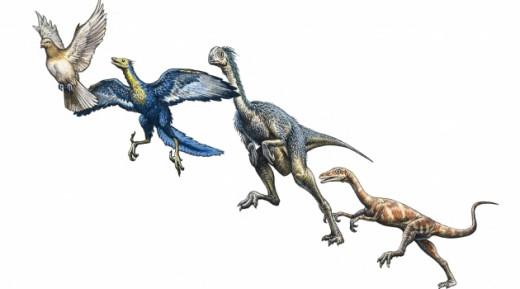 Birds Evolution from Dinosaurs