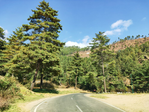 Huge trees, blue sky, white clouds, and wide road enhance the beauty of the place