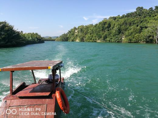 Loboc mangroves.