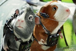 Movie 'G Force' Guinea Pig heros!