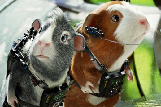 Movie 'G Force' Guinea Pig heroes!