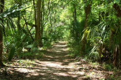 Hiking in Florida: Dangers and Precautions