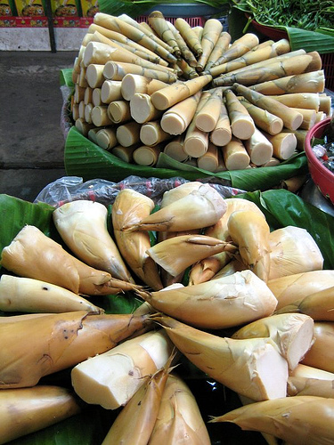 Bamboo shoots to eat.