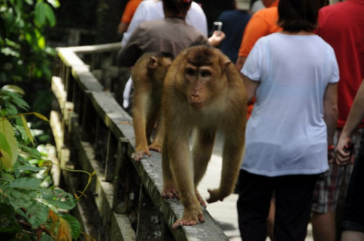 Human-animal interaction increases the risk of diseases for both species