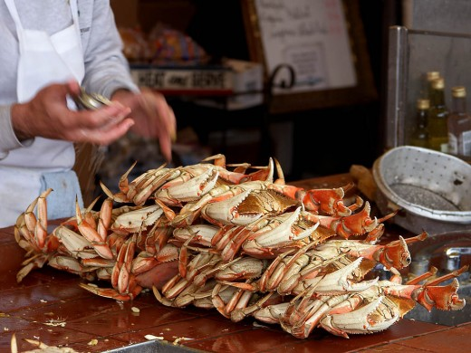 Dungeness Crabs Being Prepared For Market