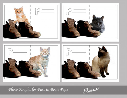 Choosing just the right cat can be daunting.