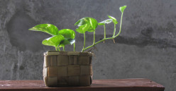 10 Plants to Attract Positivity in Your Office Space as per Feng Shui