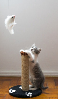 Cat Toy & Product Info & Review