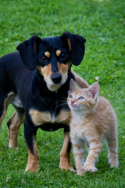 How to Keep Your Dog and Cat Safe From Coronavirus (Covid-19)