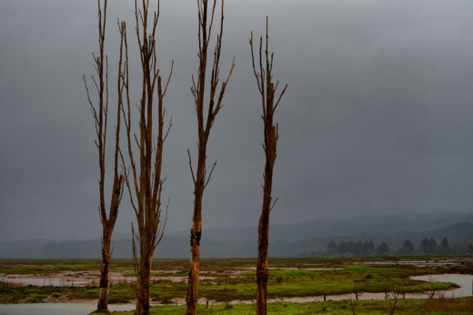 Copalis River Ghost Forest