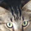 Hunter Wiktorowski profile image