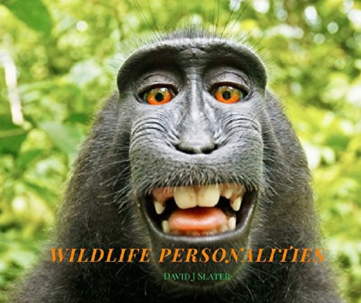"""25% of the profit from sales of """"Wildlife Personalities"""" by David Slater is donated for conservation work in Indonesia."""