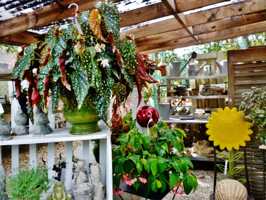Plants mixed with other items