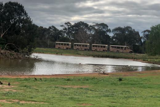 Safari passes near to Lake