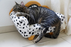 Can Pets Get or Spread Coronavirus Disease (COVID-19) to Other Animals or Human Beings?