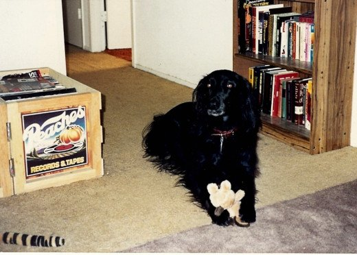Bucky was an only dog for 10 years.