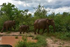 Wildlife Safari - Udwalawa National Park, Sri Lanka
