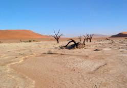 A Different Kinda Desert