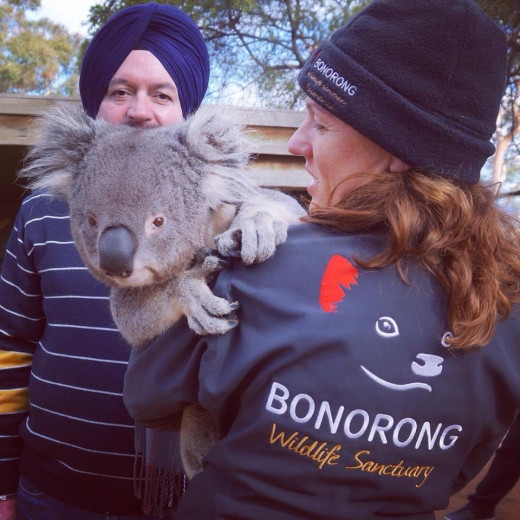 Volunteer holding Koala at Bonorong Wildlife Sanctuary. I had a chance to get picture.