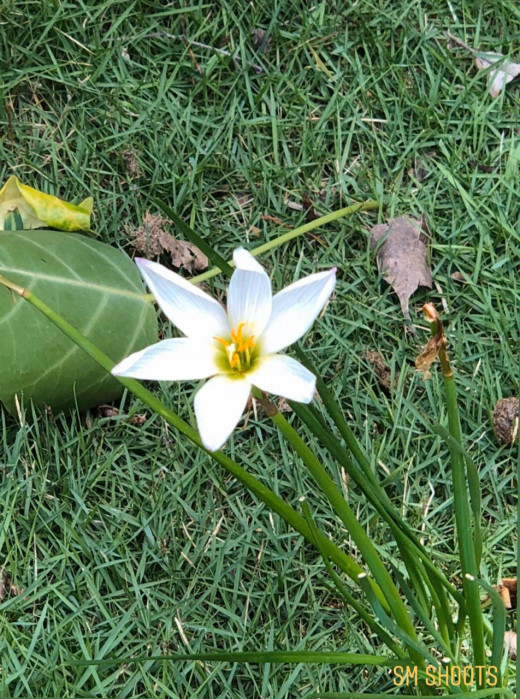 The power of a little flower to calm your mind.......