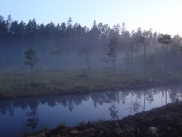 The beautiful nature of Finland.The picture is taken outside our house.