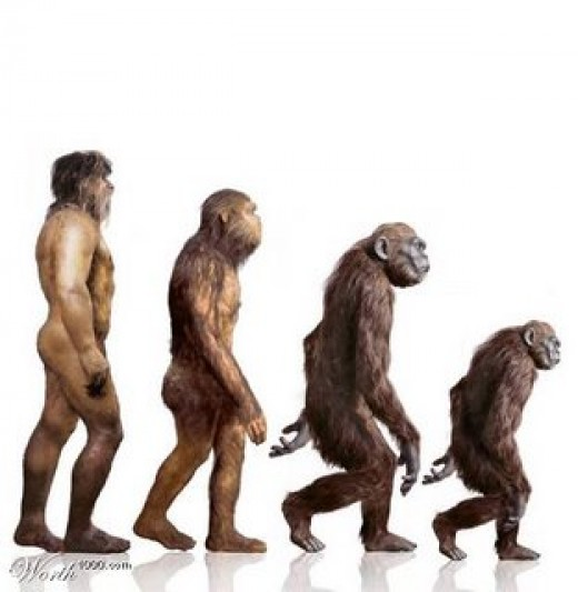 Homosapien evolution
