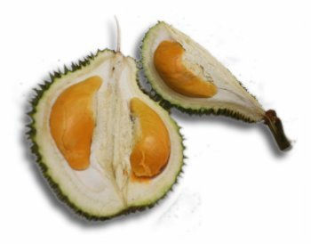 Xiao Hung (Little Red Durian)