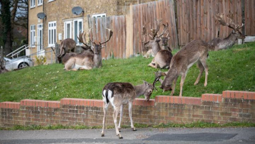 """Deer in East London...""""where have all the big monkeys gone!"""""""