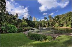 Trees and city skyline Brisbane Botanical Gardens.
