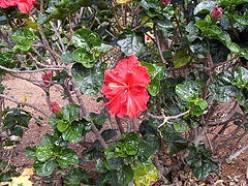 Flowers at Brisbane Botanical Gardens.