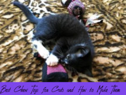 Best Chew Toys for Cats and How to Make Them