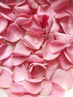 Rosewater- The Possible Benefits with Home Remedies In Day To Day Life For Skin